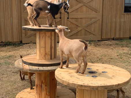 Goats Galore
