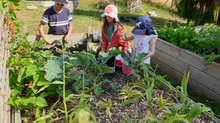 Kids Edible Garden