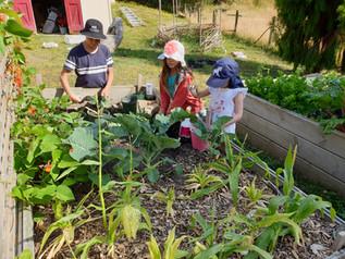 Kids Edible Garden