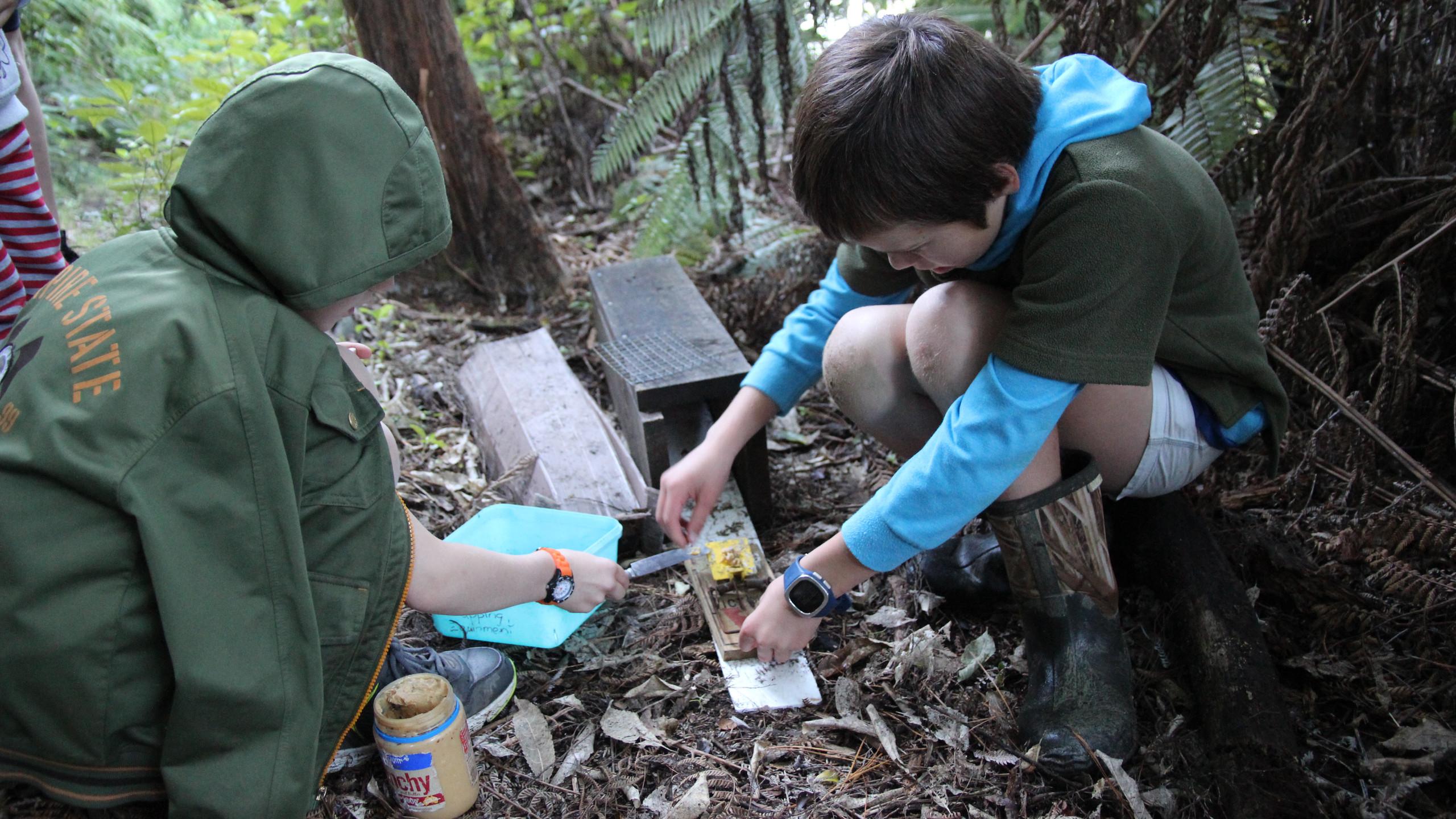 Rat traps checking