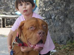 Sana convivencia entre niños y perros