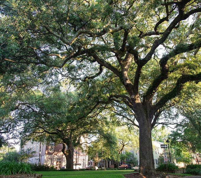 Savannah.jpeg