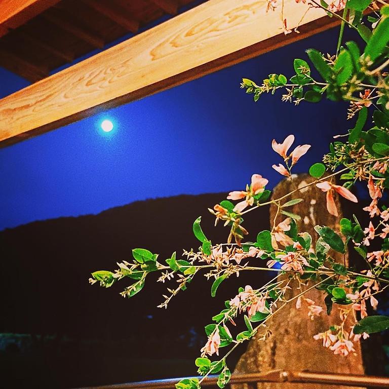 極楽寺 名残の茶会 ~実りの秋を迎えて~