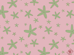 Starfish Spring