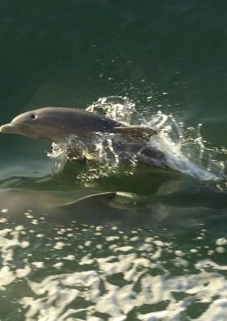 dolphin%202_edited.jpg