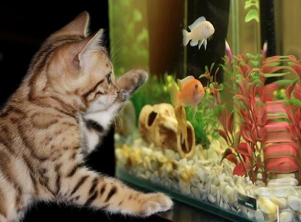 fishkeeping.webp