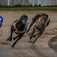 Greyhound racings.jpg
