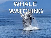 whale watching.jpg