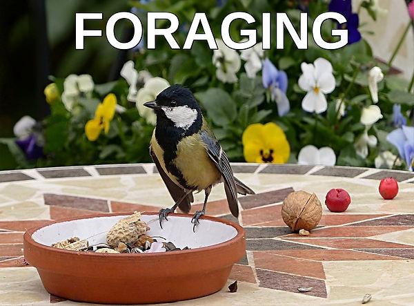 Foraging hobby