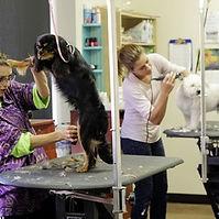 Pet Grooming.jpg