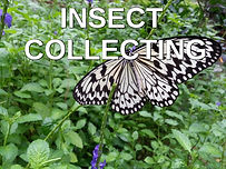 Insect collecting.jpg