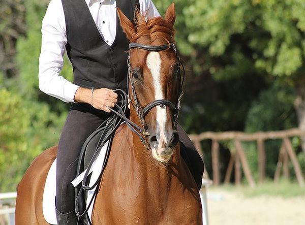 horse hobby