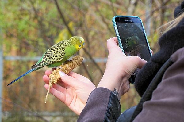 bird watching hobby.jpg