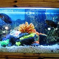 Saltwater aquarium.jpg