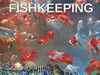 Fishkeeping.jpg