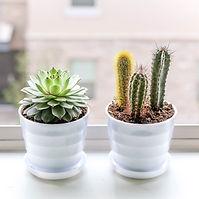 cactus growing.jpg