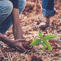 reforestation.jpg