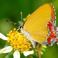 butterfly watching.jpg