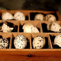 Oology (eggs collecting).jpg
