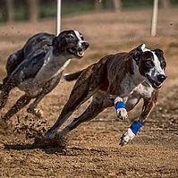 Dog racing.jpg