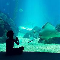 Oceanarium.jpg