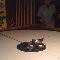 Turtle racing.jpg