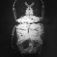 animal x ray.jpg