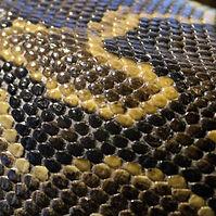 snake-skin.jpg