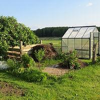 Allotment garden.jpg