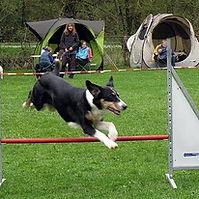 Dog Sport.jpg