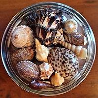 Seashells collecting.jpg