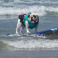 Dog surfing.jpg