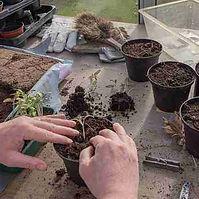 composting hobby.jpg