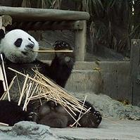 Zoo visiting.jpg