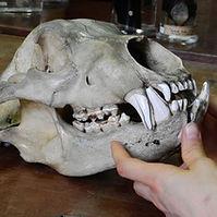 Skeleton (animal skeleton collecting).jp