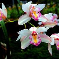 orchid raising.jpg