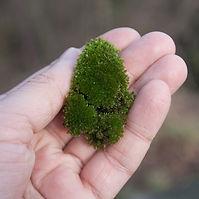 Moss Plants Growing.jpg