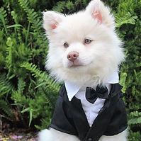 animal fancy.jpg