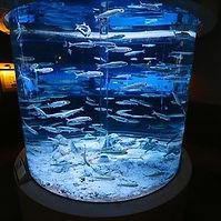 aquarium activities.jpg