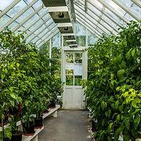 Hothouse Gardening.jpg