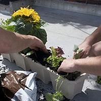 Guerrilla Gardening.jpg