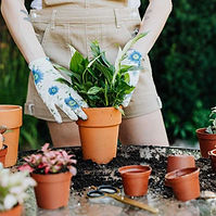 Plant parent.jpg