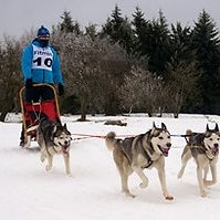 Sled dog racing hobby.jpg