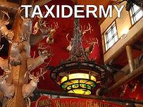 taxidermy.jpg