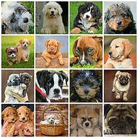 Pet adoption fostering.jpg