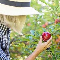 Fruit picking.jpg