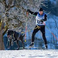 Skijoring.jpg