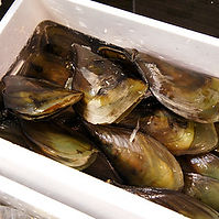 Shellfishing.jpg