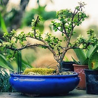 Gardening in Miniature.jpg