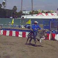 Zebra racing.jpg